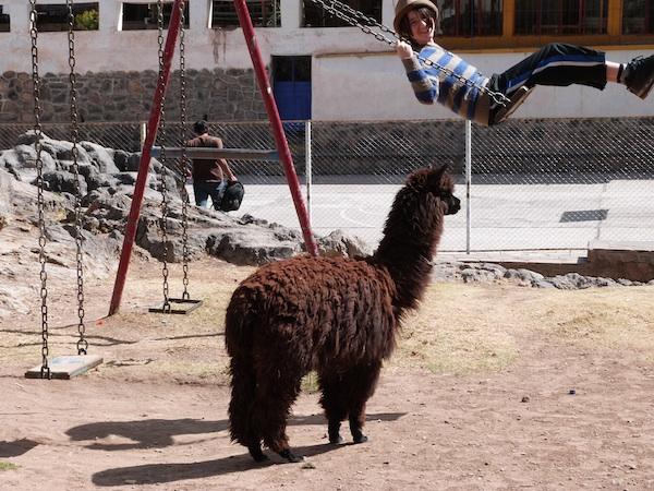 miro_swing_llama_small