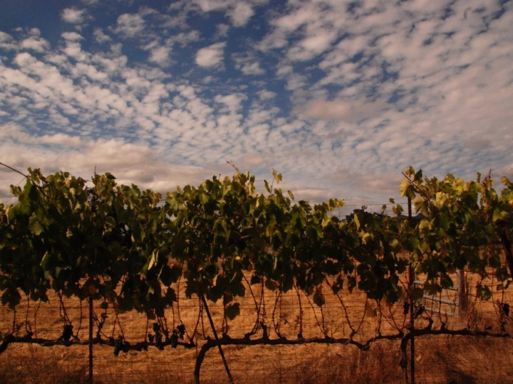 The Harvest Trail: fund your travels working at international wineries