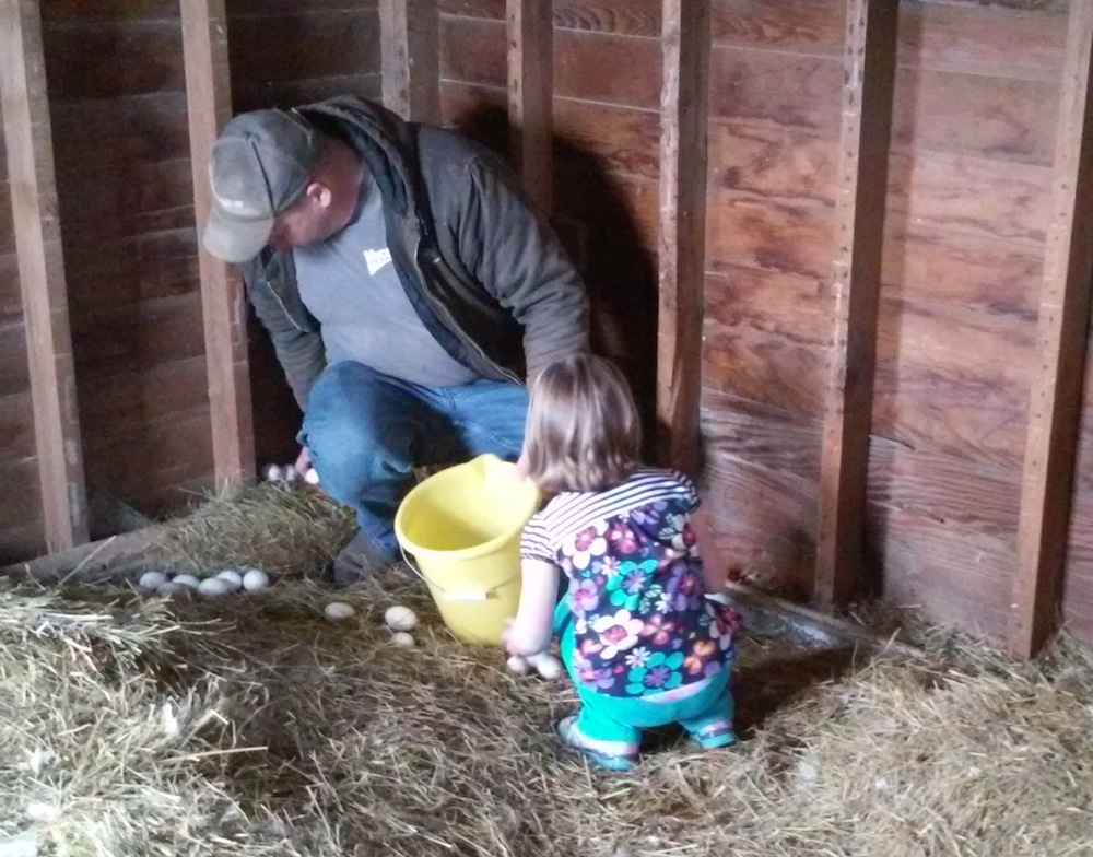 Julie 2.2015 Collecting eggs