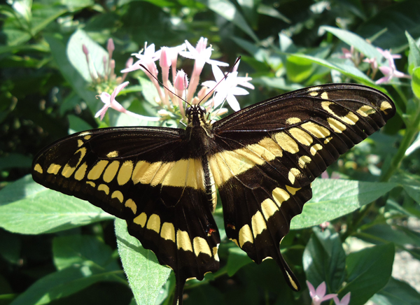 From a Consumer to a Pollinator