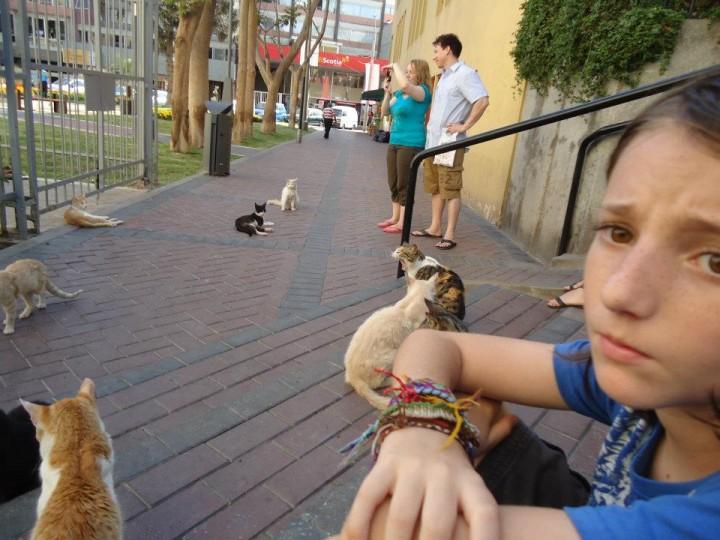 Los Gatos del Parque Kennedy: Can We Help Them?