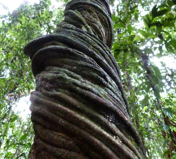 Miro's Day 3-Jungle Diary [PHOTO ESSAY]